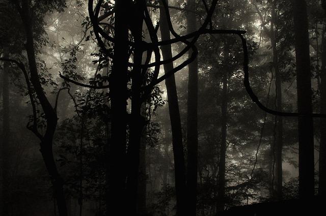 nature-2630463_640.jpg